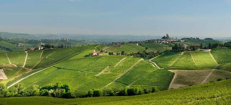 Pio Cesare Wine
